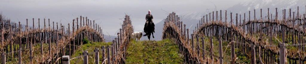 Tiberio horseback in vineyard